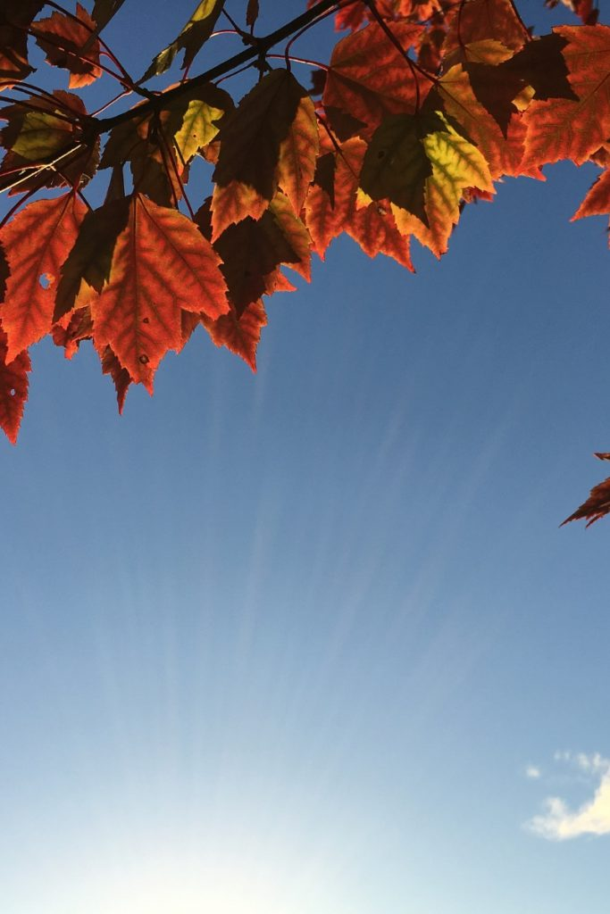 otoño en l'escala